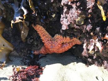 A lone starfish.