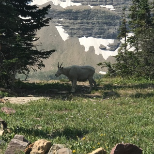There is plentiful wildlife - a herd of mountain goats may wander across your path.