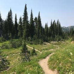 Alpine (~7,000 ft., actually) meadows.