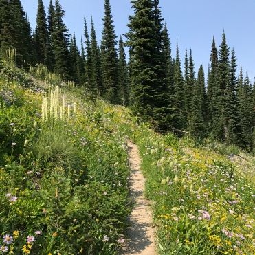 We walked through fields of wildflowers...